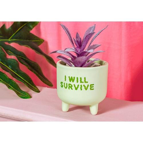 Mini cache pot I will survive