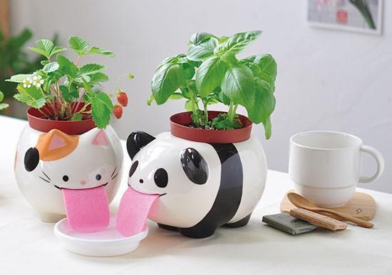 Papa Peropon Panda - basilic